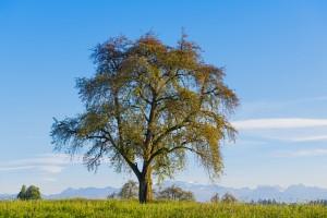 drzewo-wolnosci-finansowej